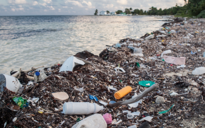 Why Every Day Should Be Plastic Free Day